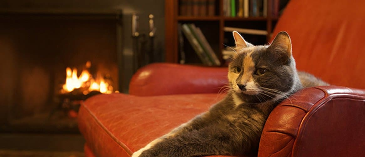 A cat sitting on a leather couch at the Porches Inn signifying Porches Inn as a pet friendly hotel
